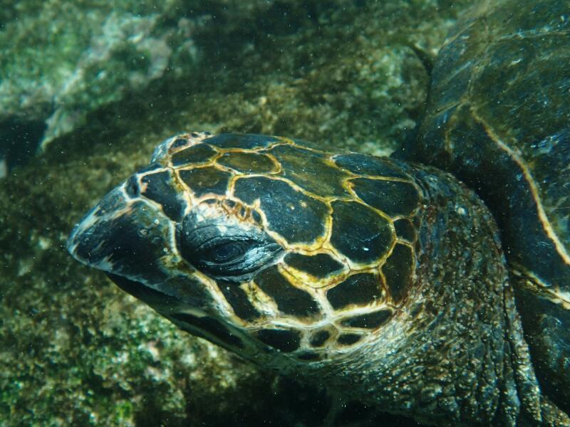 Snorkeling-10