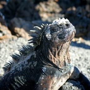 Galapagos - Hommage à la Vie Sauvage