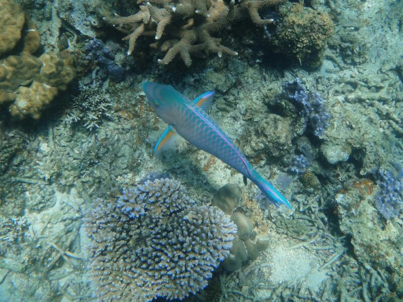 Perh-snorkel-Gina-Heatley-22