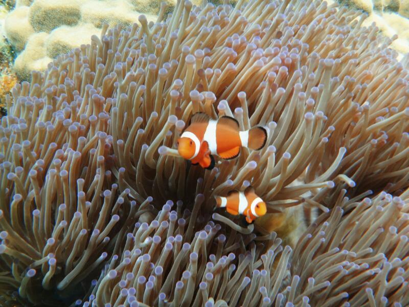 Perh-snorkel-Gina-Heatley-23