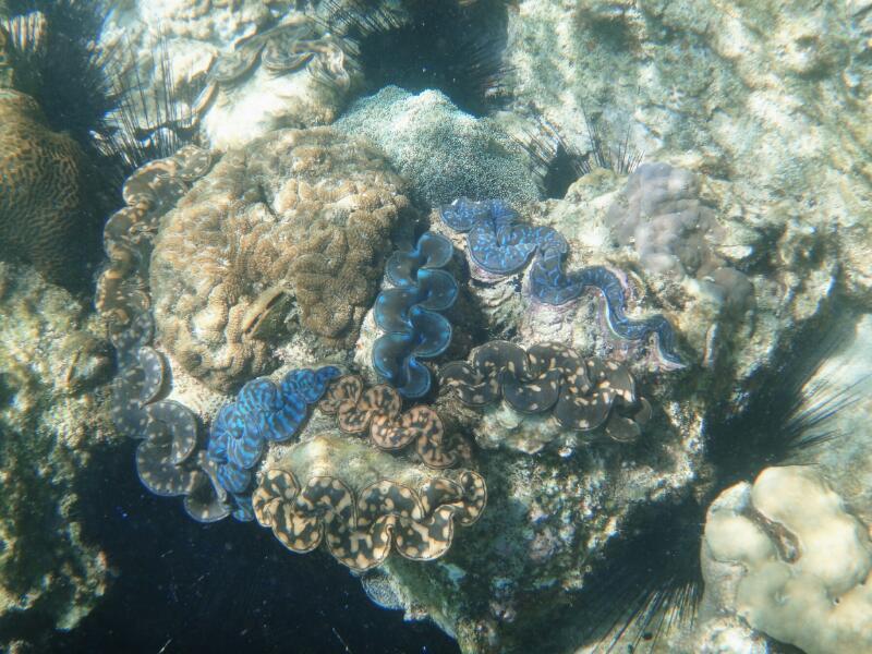 Perh-snorkel-Gina-Heatley-25