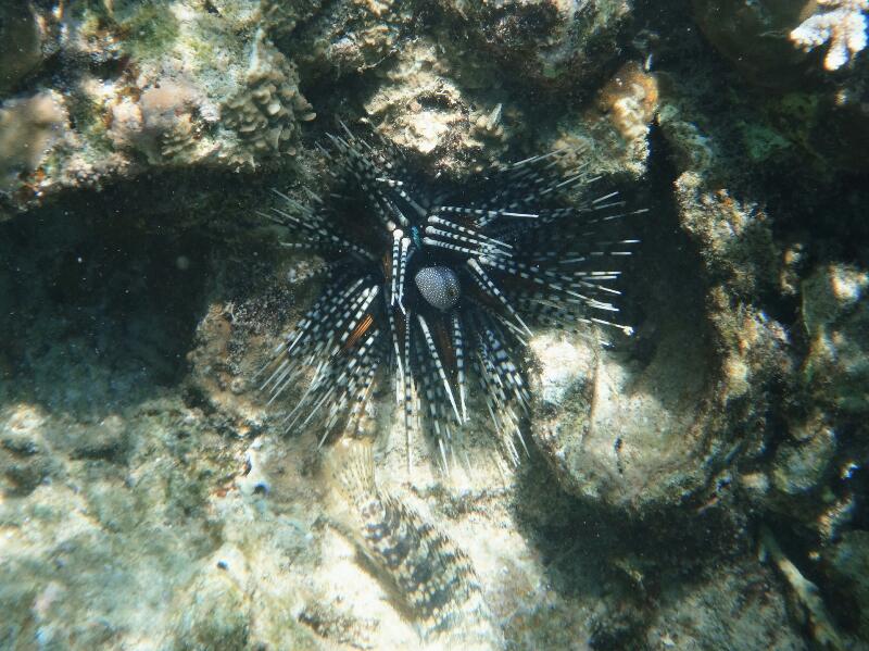 Perh-snorkel-Gina-Heatley-26