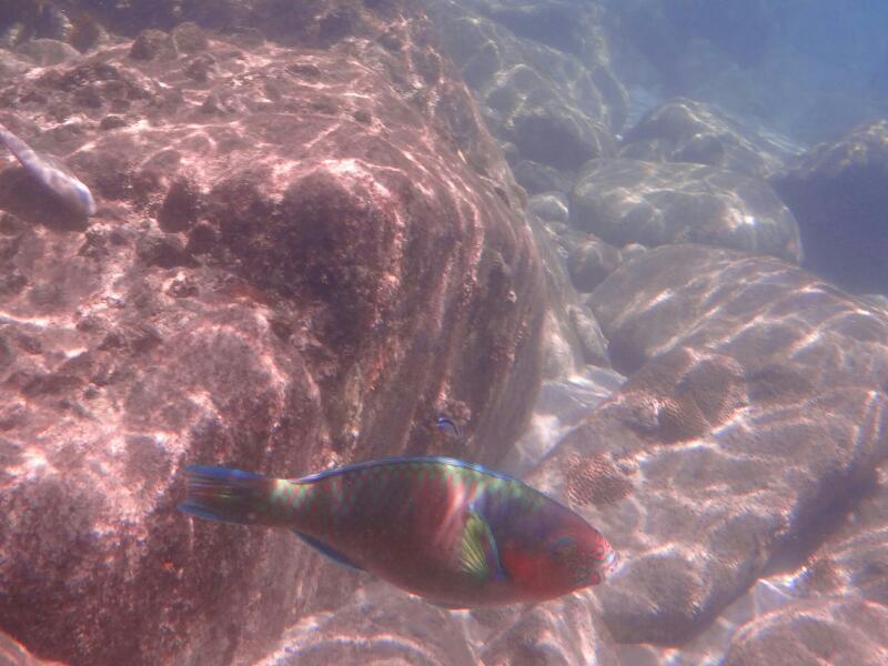 Perh-snorkel-Gina-Heatley-28
