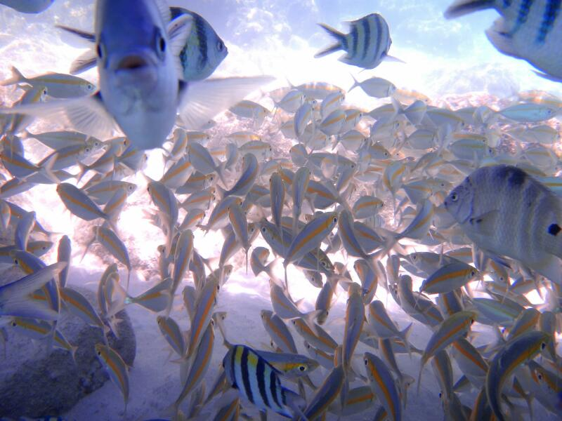 Perh-snorkel-Gina-Heatley-29