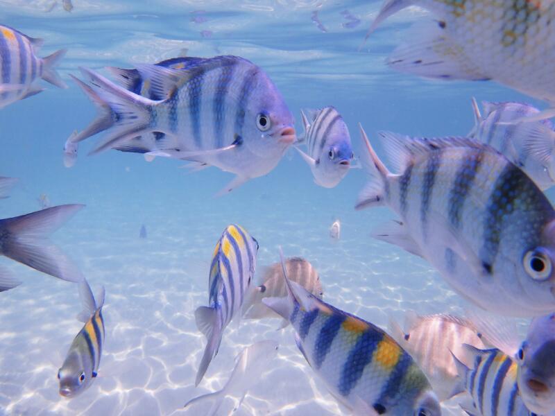 Perh-snorkel-Gina-Heatley-31