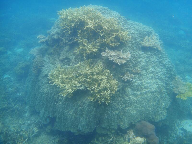 Perh-snorkel-Gina-Heatley-33