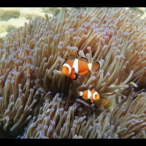 Petit tour dans le monde de Nemo
