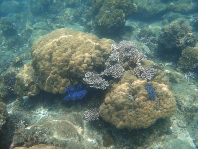 Perh-snorkel-Marjorie-Hobin-10