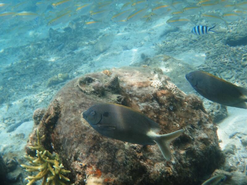 Perh-snorkel-Marjorie-Hobin-13