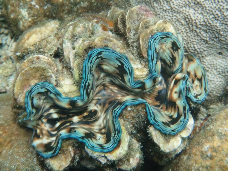 Perh-snorkel-Marjorie-Hobin-14