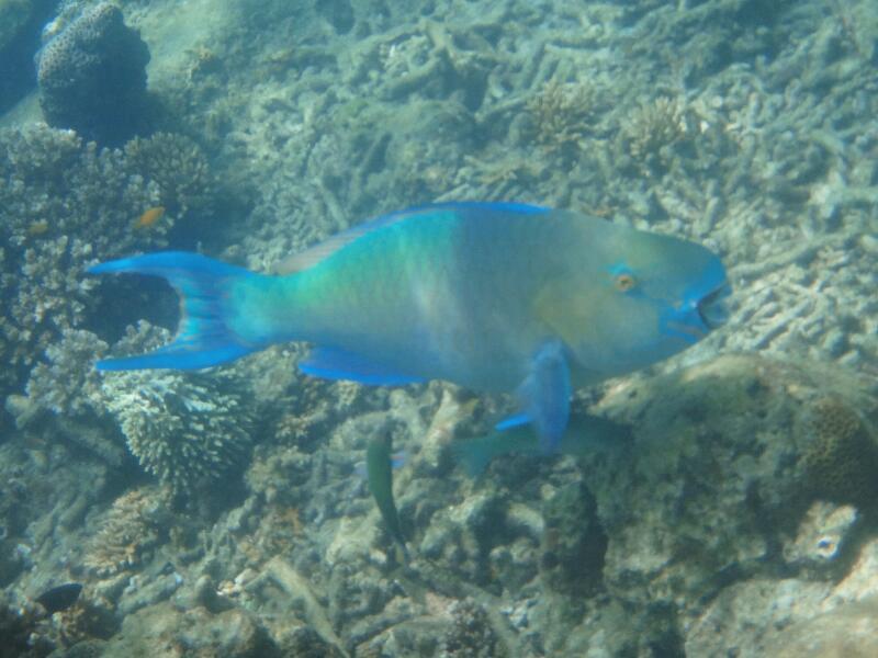 Perh-snorkel-Marjorie-Hobin-17