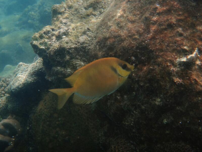 Perh-snorkel-Marjorie-Hobin-2