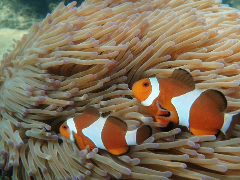 Perh-snorkel-Marjorie-Hobin-20