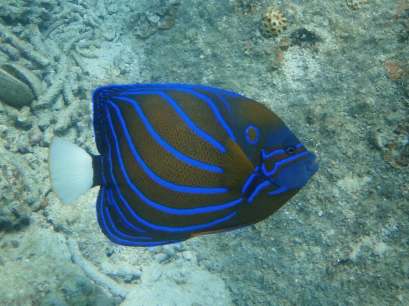 Perh-snorkel-Marjorie-Hobin-8