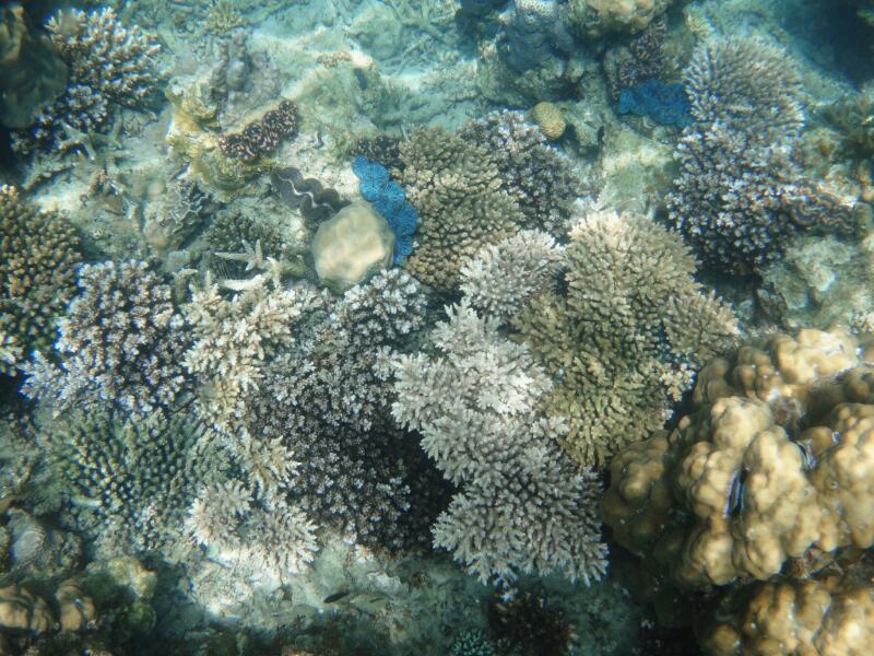 Perh-snorkel-Marjorie-Hobin-9