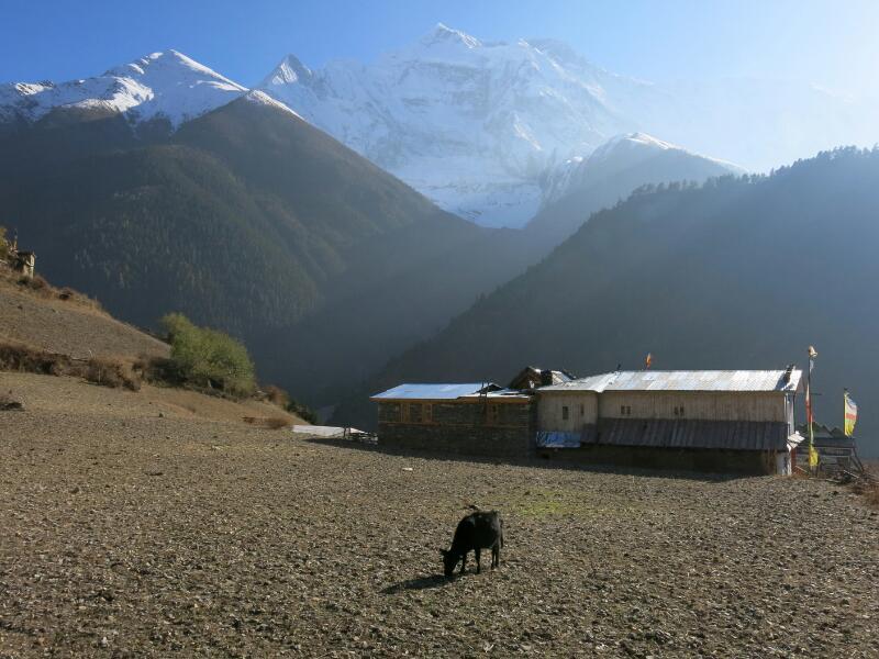 Annapurna-1-Pisang-Marjorie-Hobin-26