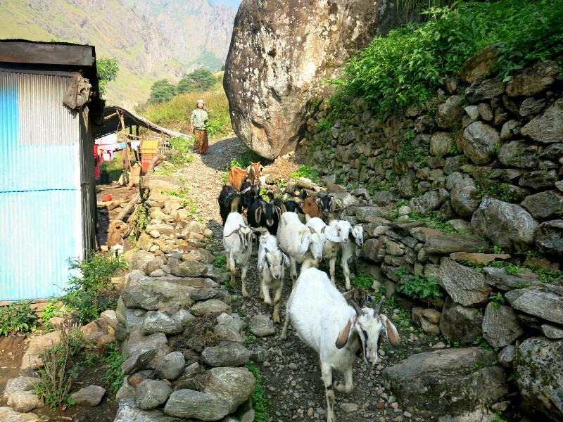 Annapurna-1-to-Tal-Marjorie-Hobin-51