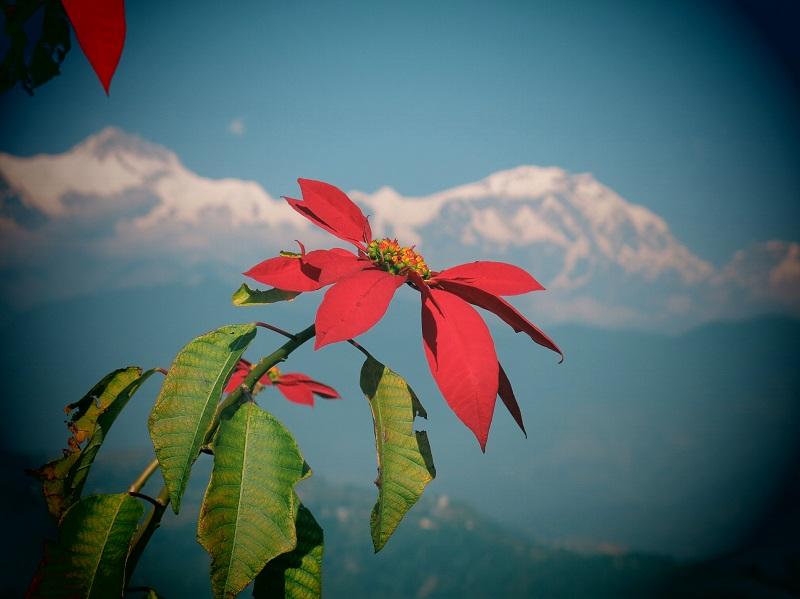 Pokhara-Marjorie-Hobin-6