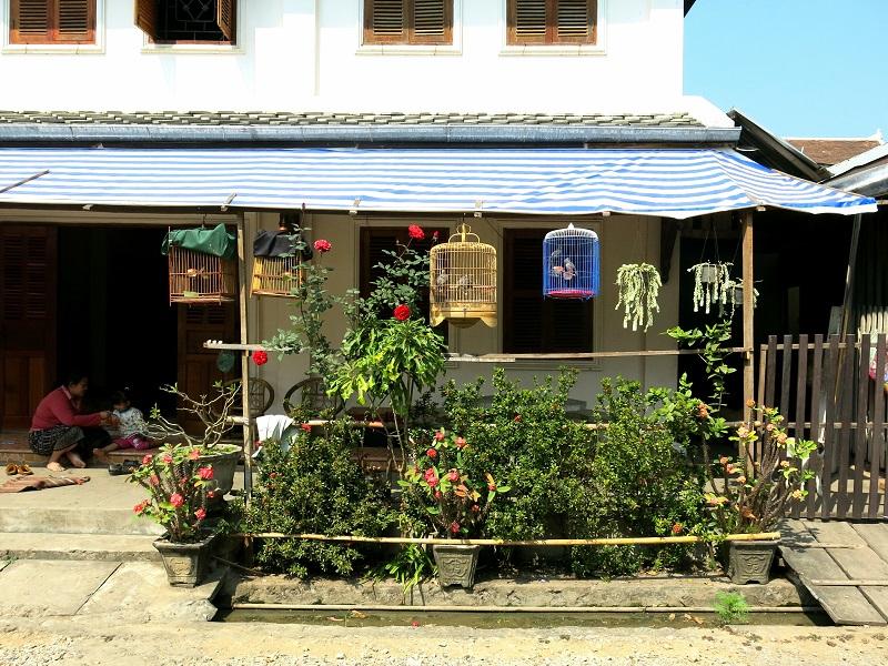 Luang-Prabang-Marjorie-Hobin-17