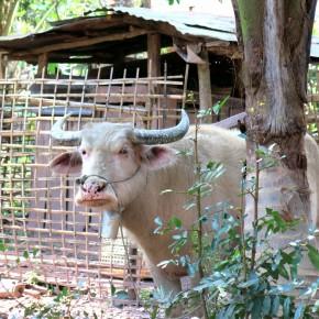 Retraite bucolique à Muang Ngoi