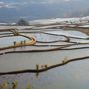 Les pieds dans l'eau à Yuanyang