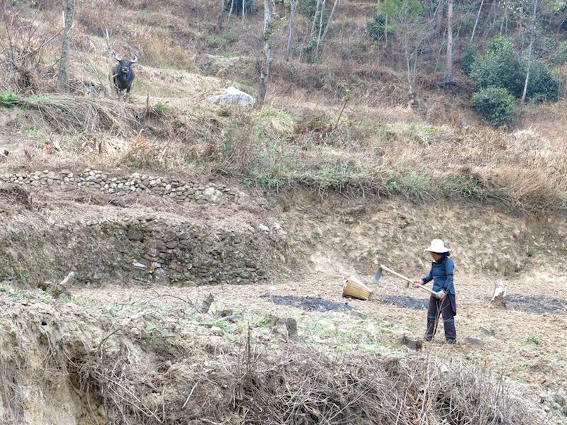 Yuanyang-villages-Marjorie-Hobin-11