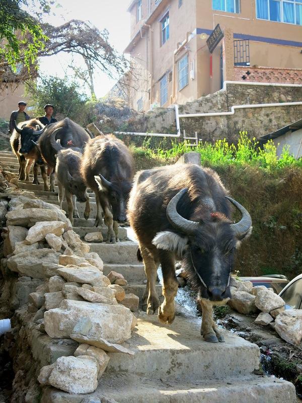 Yuanyang-villages-Marjorie-Hobin-16