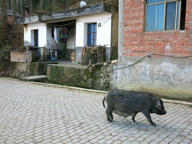 Yuanyang-villages-Marjorie-Hobin-30