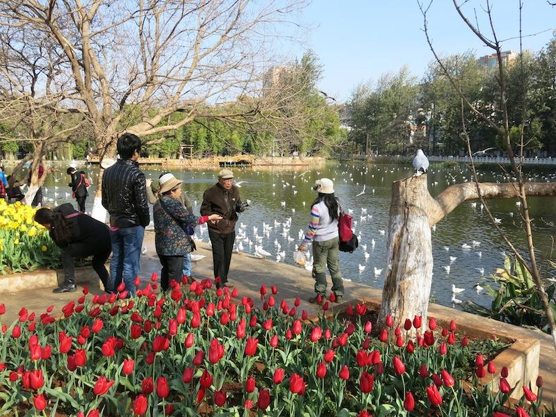 Kunming-parc-Marjorie-Hobin-2