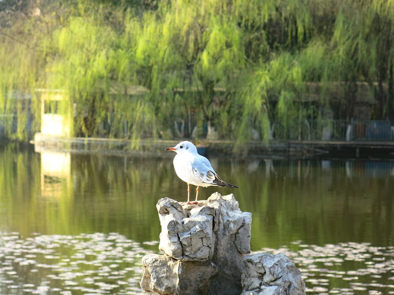 Kunming-parc-Marjorie-Hobin-25
