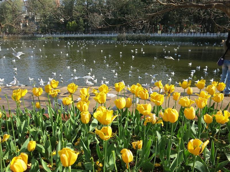 Kunming-parc-Marjorie-Hobin-3