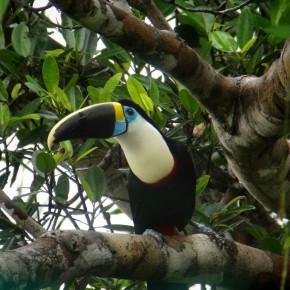 Amazonie - Grosses & petites bêtes insolites
