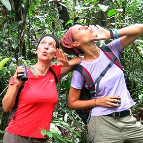 L'appel de la Jungle...
