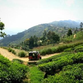 Au coeur du Pays du Thé à Haputale